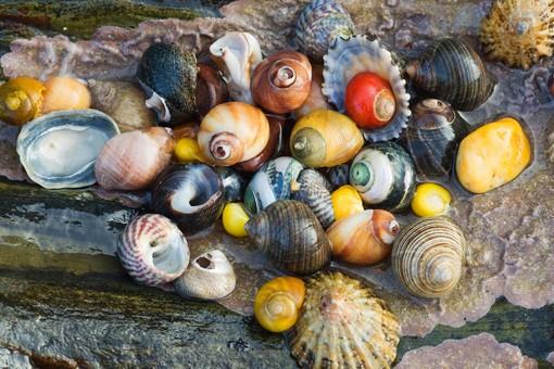 shells2560_1
